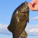 Spring Bass Thumb