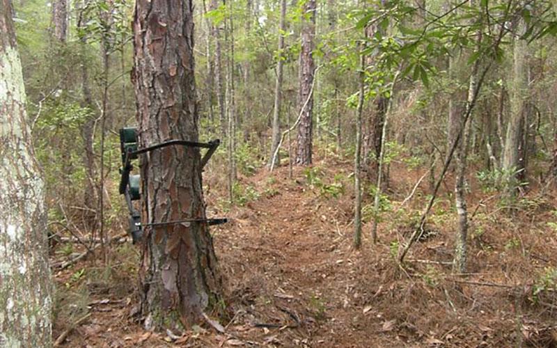 Climbing_Tree_Stand