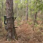 Tree-Stand-Thumb