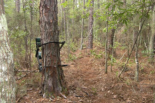 Tree Stands 101