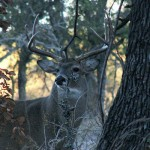 deer-hunting-hindsight-thumb