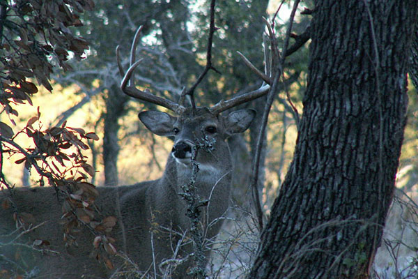 Deer Hunting As A Kid: What I Would Do Differently Today