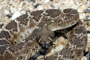 Dangerous Animal Encounters Part 3: Snakes