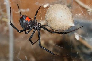 Dangerous Animal Encounters Part 4: Spiders And Scorpions