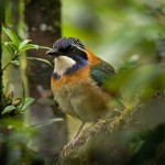 birding-basics-thumb