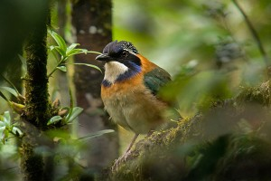 Birding Basics: How To Get Started