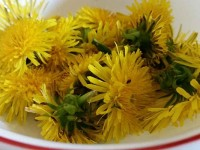 dandelion-recipes-thumb
