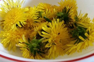 Dandelions, A Weed We Should Eat – Recipe Ideas