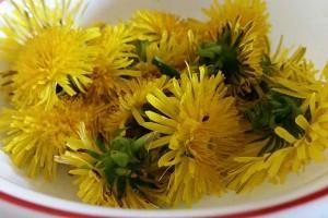 Dandelions, A Weed We Should Eat – Recipe Ideas