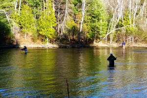 Fly Fishing Basics for Beginners