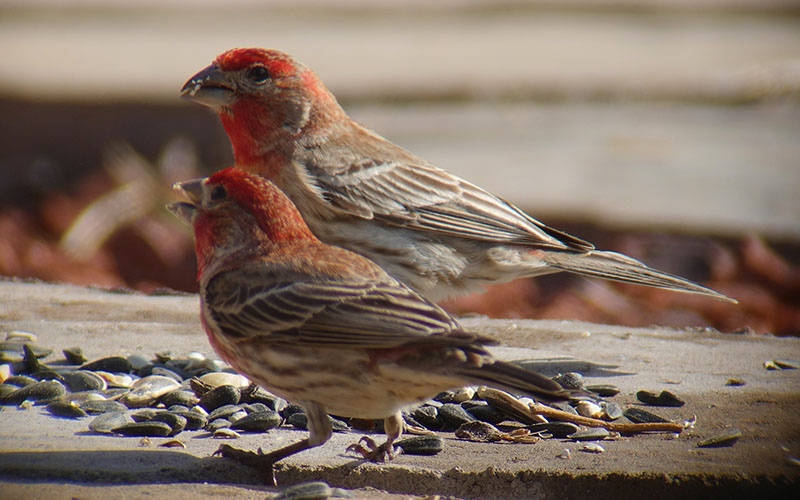 digiscoping-1