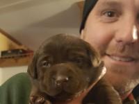 choosing-dogs-thumb