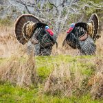 Turkey Hunting In Foul Weather